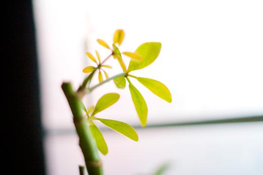 plant_003.jpg